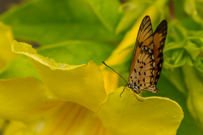 butterfly-with-flower